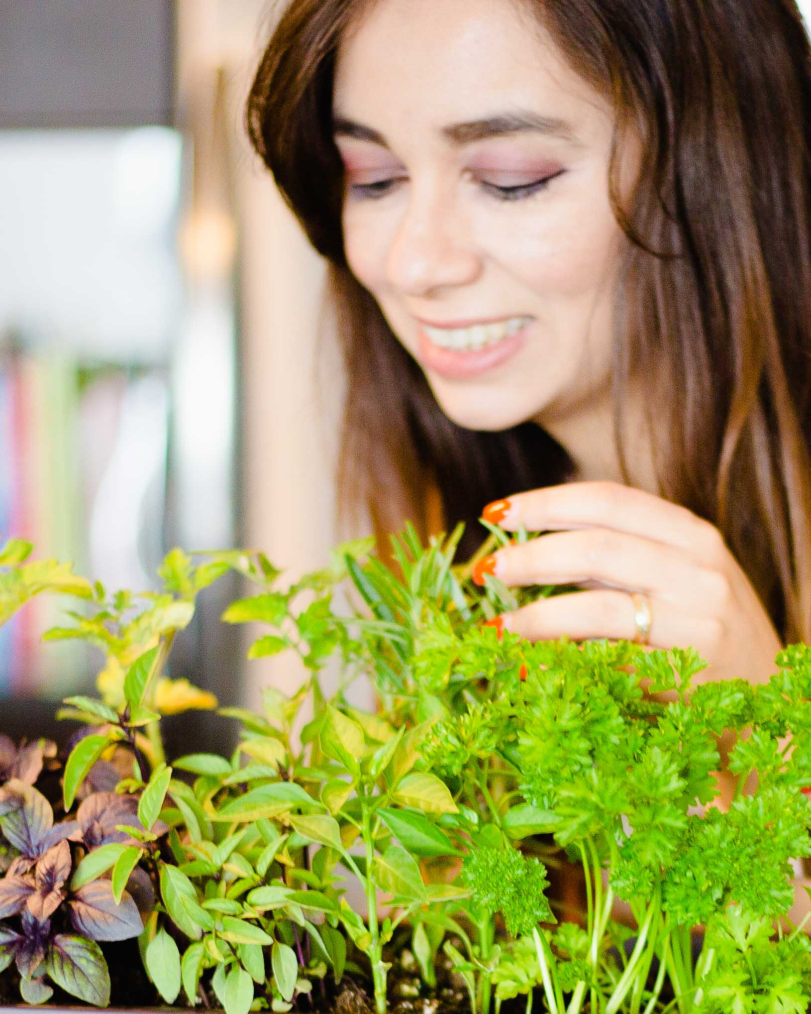 How to Grow Garden Vegetables in the Kitchen and Have Fresh Herbs Year-Round Effortlessly
